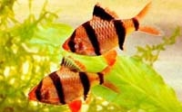 Сказка про бережное отношение к аквариумным рыбкам