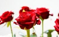 ... С красивым букетом из роз ...