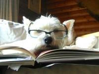 Какими методами лечат собаки