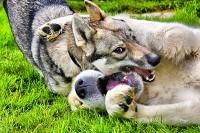 Собаки Гресси и Рудж поднимают настроение ))