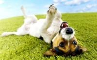Собакотерапия (канис-терапия) для здоровья и настроения