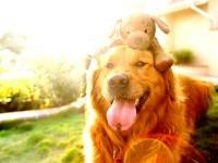 Животные помогают взрослым и детям справиться с болезнями и плохим настроением