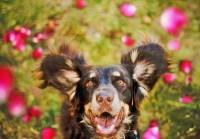 Задачи собакотерапии (канистерапии)