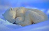 Новогодние праздники - прекрасный повод выспаться