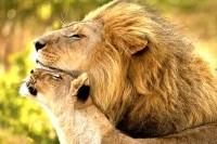 Кто в доме главный или семейное лидерство