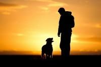 Домашние животные помогают от депрессии