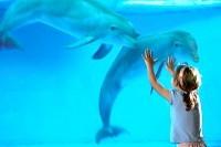 Дельфинотерапия – способ обрести здоровье и отличное настроение