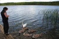 Кормление уток или лебедей
