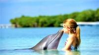 Правила успешных занятий с дельфинами