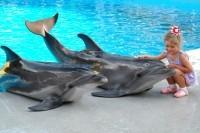 Способы взаимодействия с дельфинами