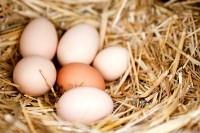 Деревенские яйца ждут