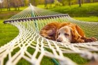Даже собаке надо отдыхать )