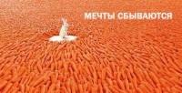 Кролик и морковь - мечты сбываются